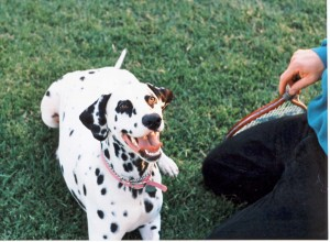 Molly's legacy lives on in the knowledge gained by a veterinary student.